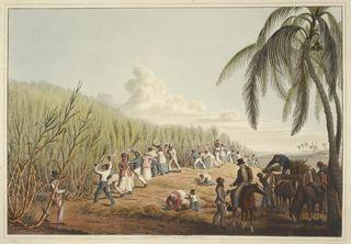 Jamaica c13321-20