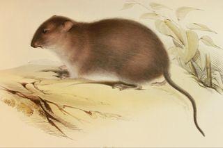 Beagle zoology (mammals)