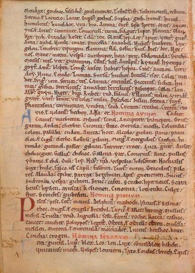 Vesp A XIV, f. 8v C7561-01