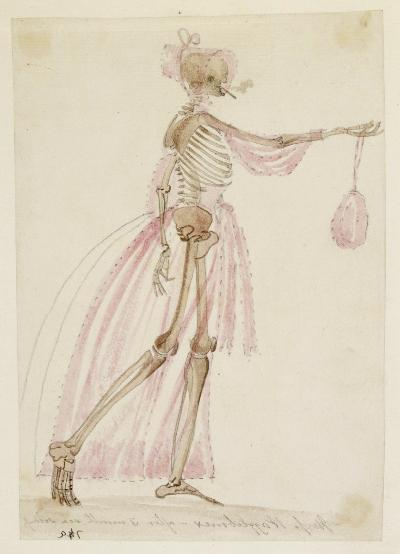 Anatomical drawings 6