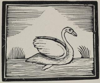 Swan for blog