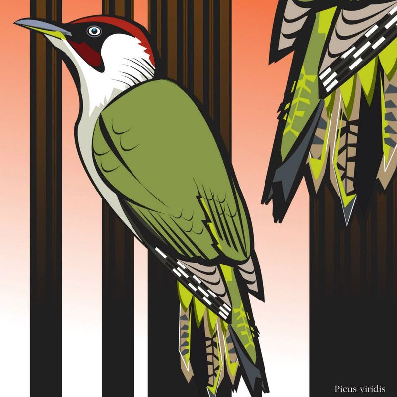 Green Woodpecker_electrographica