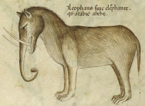 Afbeeldingsresultaat voor medieval manuscript elephant