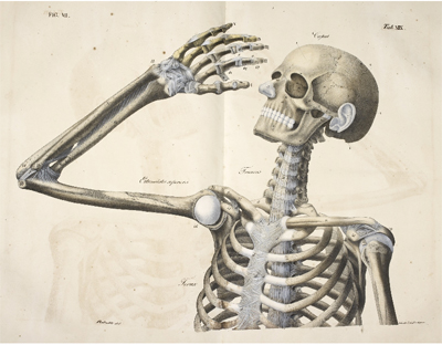 Anatomical drawings 1