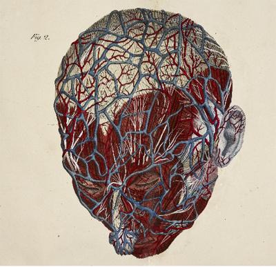 Anatomical drawings 3