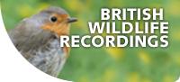 British-wildlife-recordings