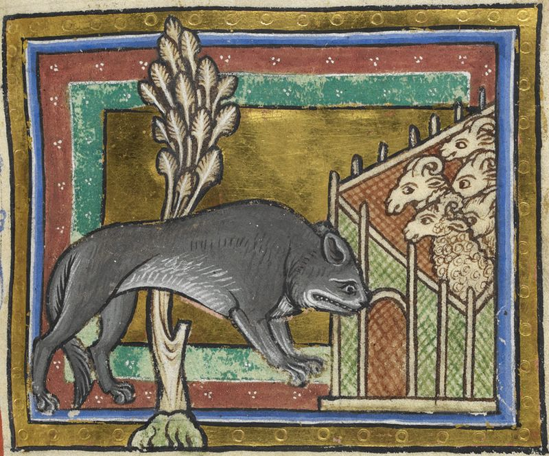 A wolf approaches a grange of sheep c.AD1200 - http://britishlibrary.typepad.co.uk/digitisedmanuscripts/2013/02/nothin-but-a-hound-dog.html