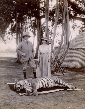 Curzon tiger