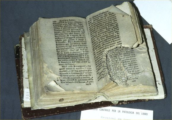 Mouse damaged book