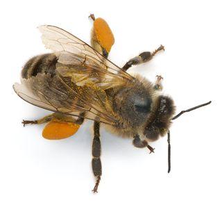 Bee 148325846 (2)