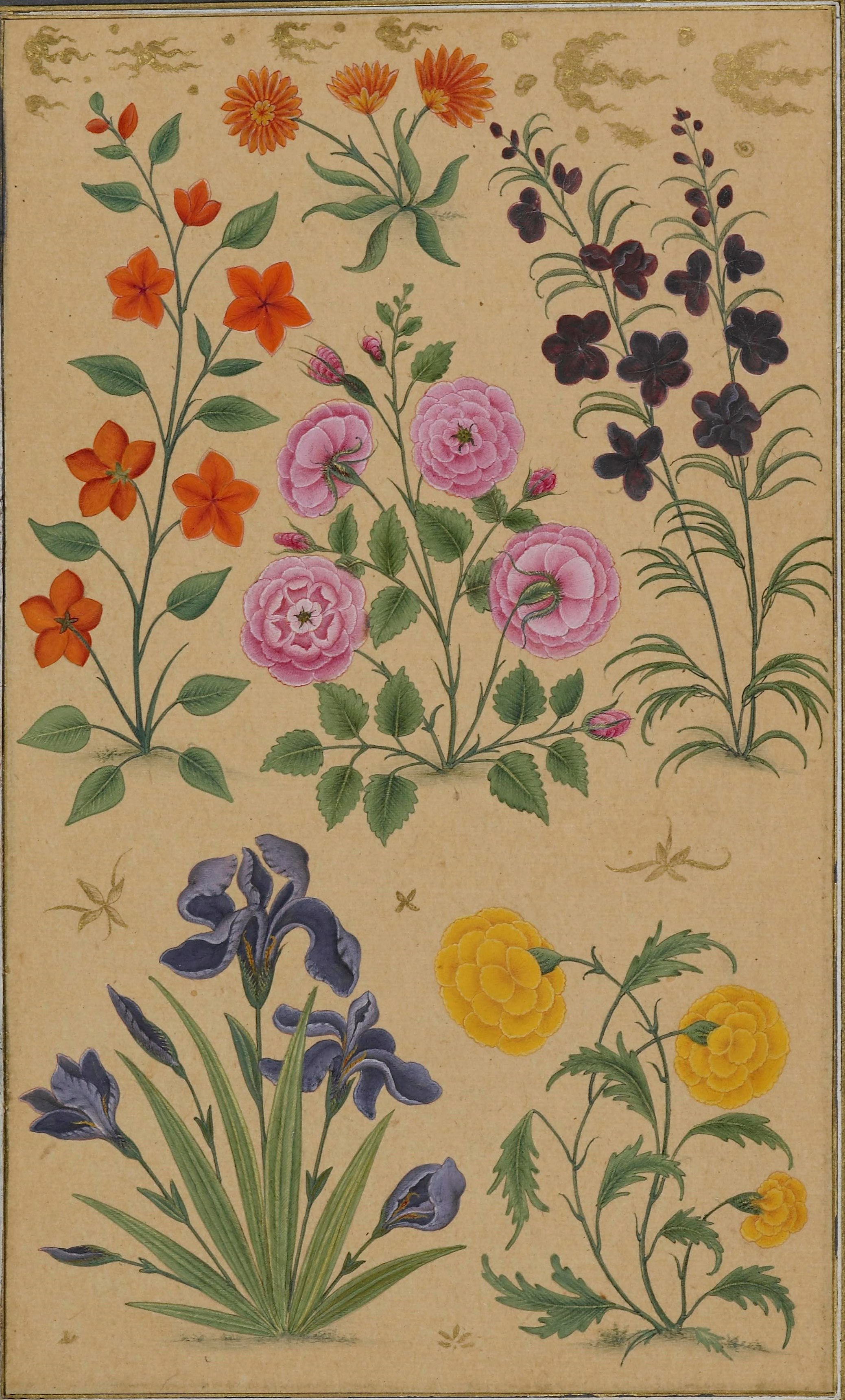Mughal flower studies and their european inspiration asian and add or 3129 f67v flower studies izmirmasajfo