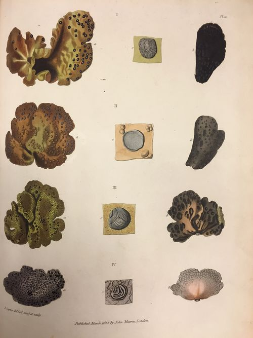 Sabine appendices (lichen)