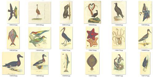 Birds, fish & mammals