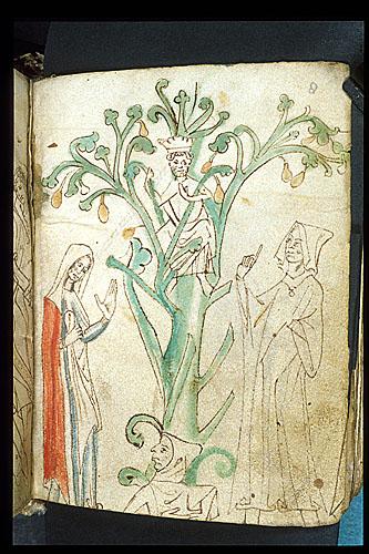 King Mark Pear Tree
