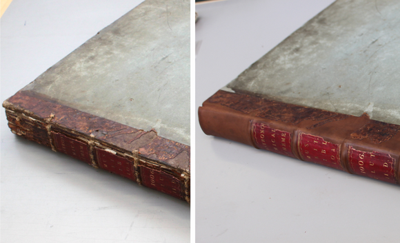 Before and after conservation