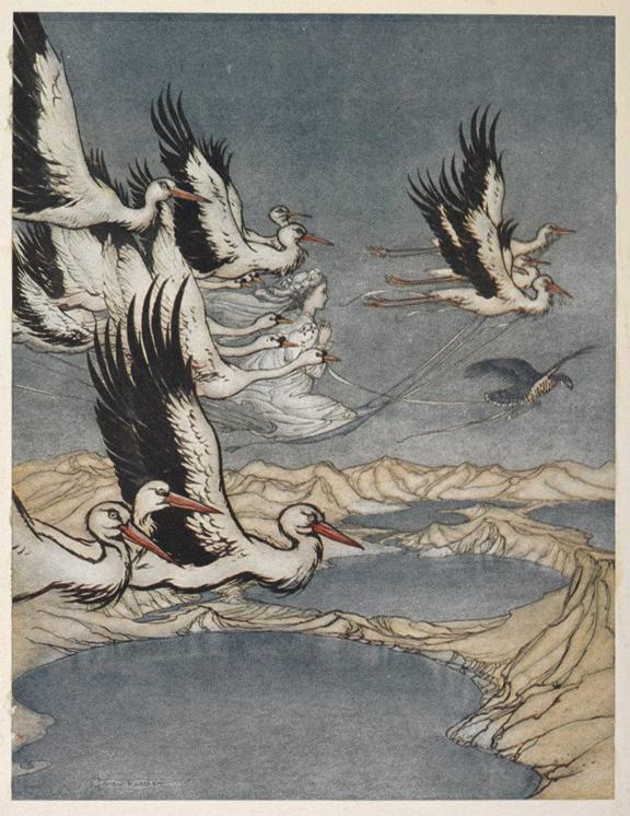 Magic of birds 2