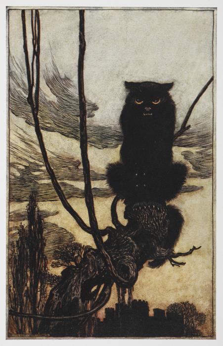 Black cat M00024-55