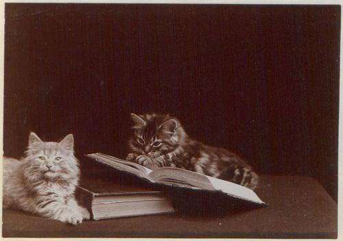 1280px-The_Globe_kittens_(HS85-10-13446-3)