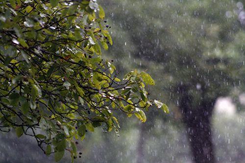Rain-829669_1920